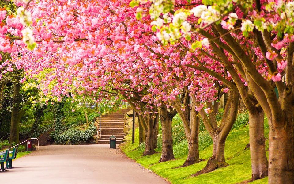Danas počinje proljeće…