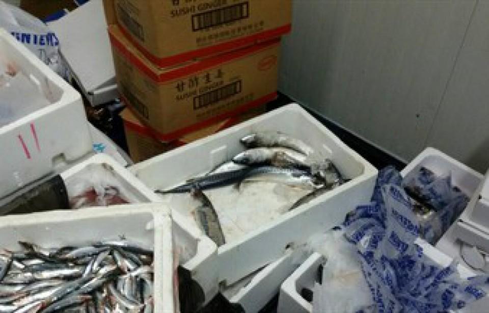 Oduzeto 325 kilograma dagnji, ribe i prstaca