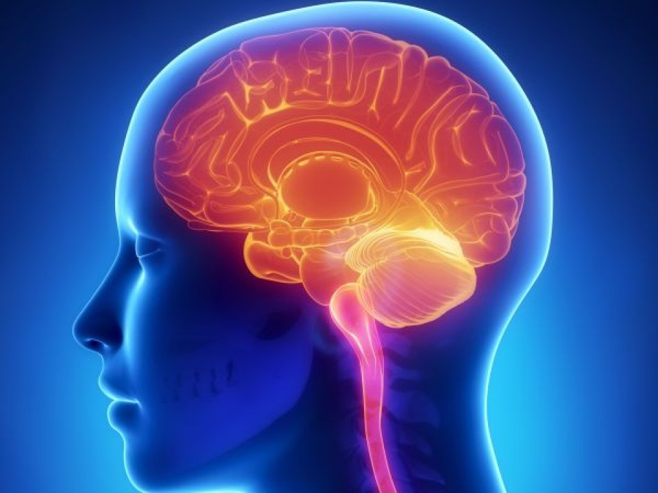 Uticaj stranog jezika na naš mozak