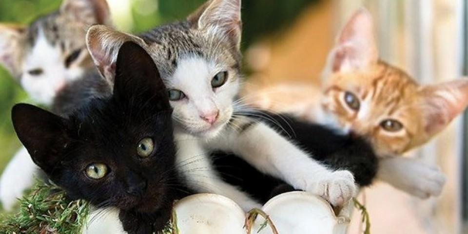 Oglas za šaptača mačaka u Grčkoj napravio pometnju, prijavilo se 35.000 osoba